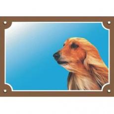 Barevná cedulka Pozor pes, Afghánský chrt