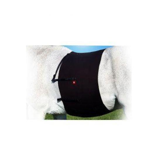 VETOFLEX Recov. Belt/Kolikový pás na ježdění, vel.PONY